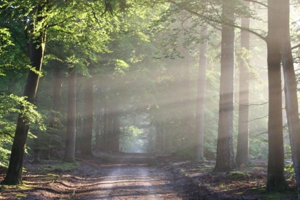 Buen Camino!  The Path of Transformation